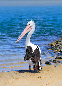 pelican standing on sand near body of water