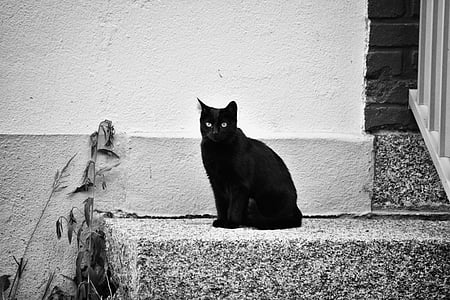 short-coated black cat on gray concrete stair