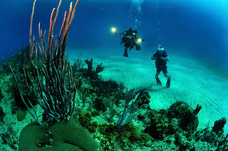 two divers taking photo under sea