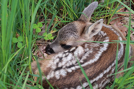 brown deer kid lying on grass field during daytime