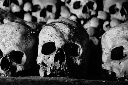 three skull on black surface