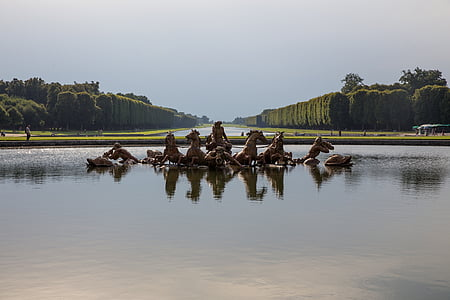 horse on body of water in front of tall trees