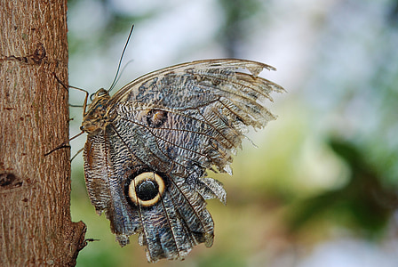 owl butterfly in selective focus photography