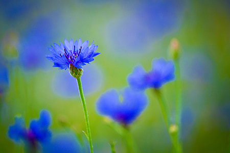 macro shot of blue flowers
