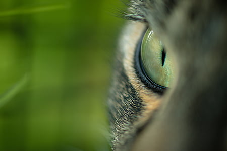closeup photography of cat