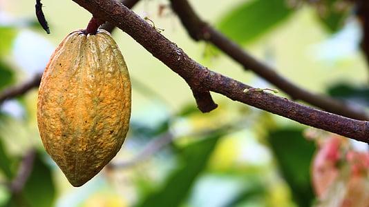 oval orange fruit