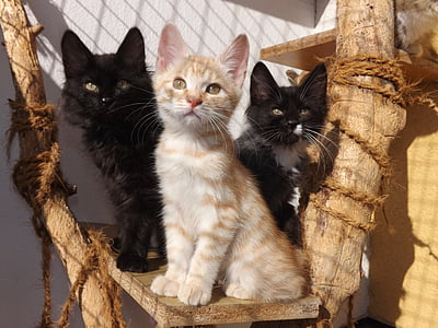 closeup photo of three black and white kittens on brown wood plank