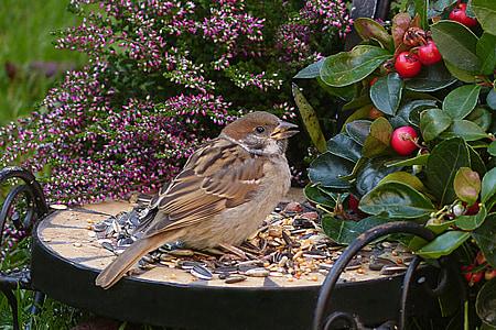 brown Maya bird eating seeds during daytime