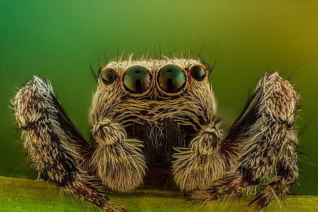macro photography of gray jumping spider