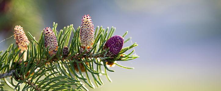 close photo of purple petaled flowers
