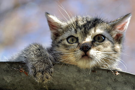 selective focus photography of brown tabby kitten