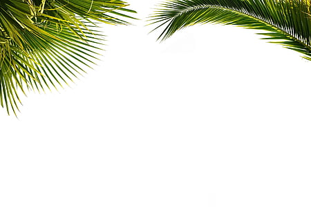 palm, wallpaper, paper, foliage, plant, nature
