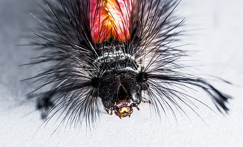 macro photography of black and red insect