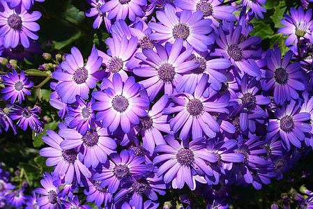 close-up photography of bunch of purple petaled flowers