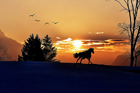 photo of horse near forest during golden hour