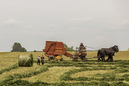 farmers harvesting crops during daytime