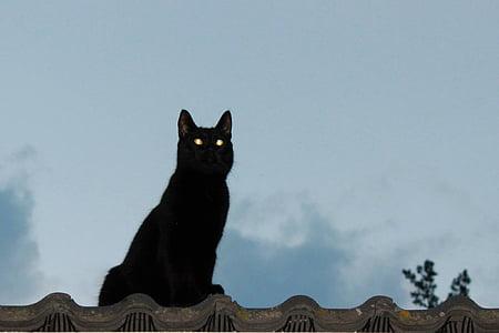 photo of black cat sitting on ledge