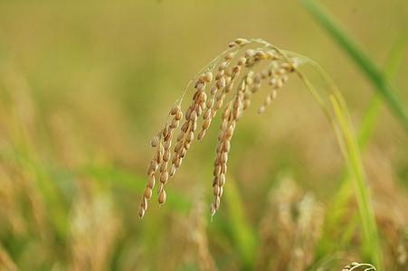 tilt shift photography of rice grains