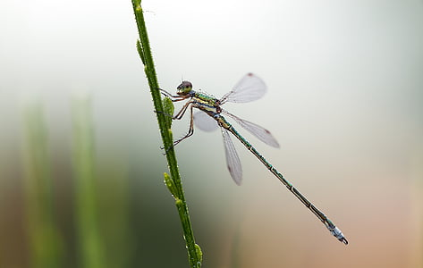 green and black dragonfly in close-up photography