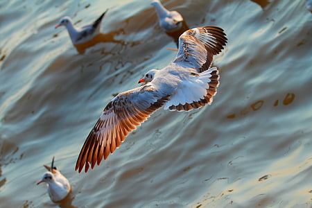 aerial view photography of ring-billed gull