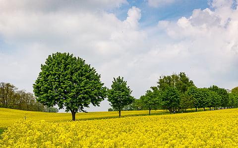 green treesz