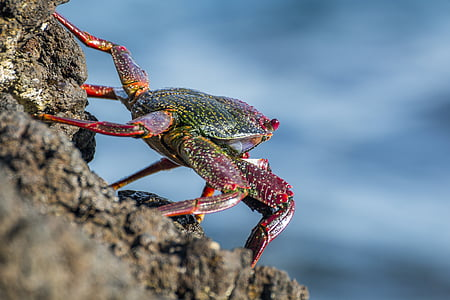 depth of field photograph of crab