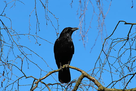 raven perching on tree branch