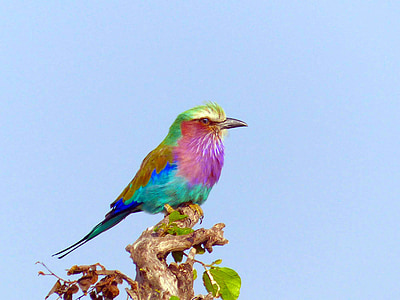 multicolored bird on tree branch