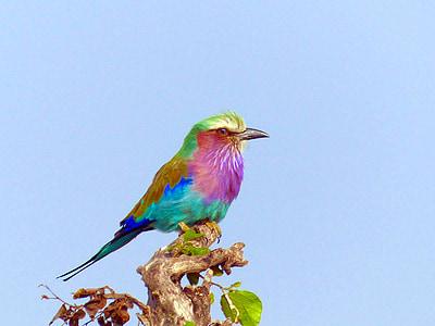 multicolored bird on tree branch