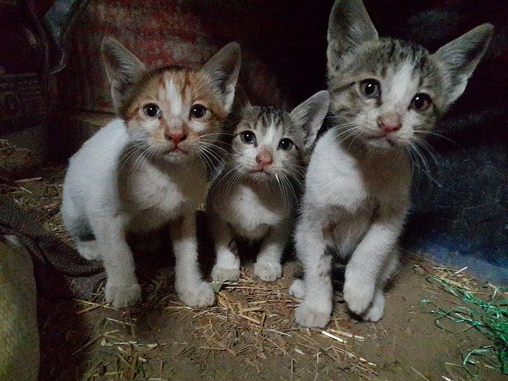 three silver tabby kittens on brown soil