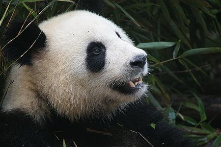 white and black panda at daytime