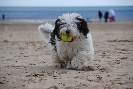 dog standing on brown sand while sucking green ball