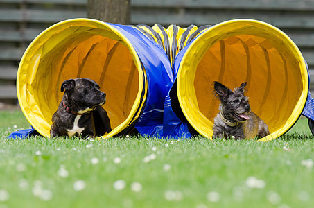 two black dogs lying down on grass inside blue and yellow play agility trainer