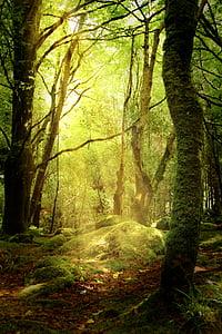 forest, glade, autumn, moss, forest floor