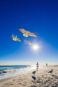 white birds flying above beach