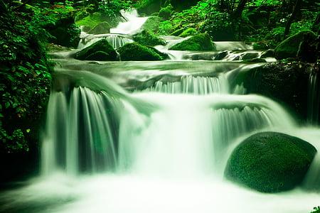 waterfall near trees