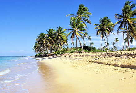 seashore with palm trees under blue skies