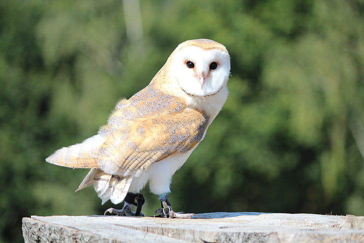 white and brown owl on rock