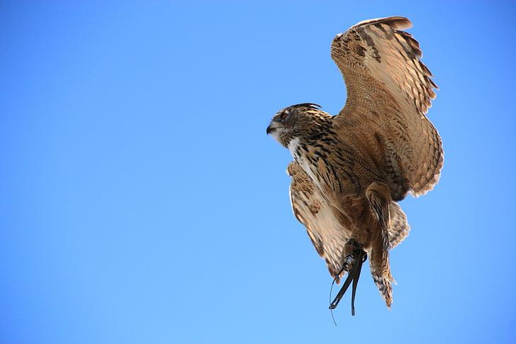 brown hawk under sunny blue sky