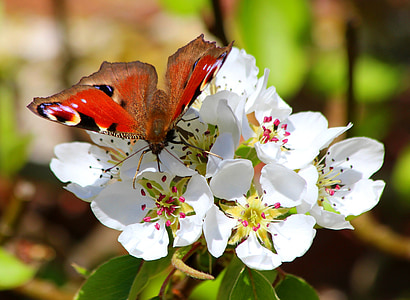selective focus photography of peacock butterfly on white flower