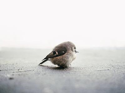 brown bird on concrete pavement