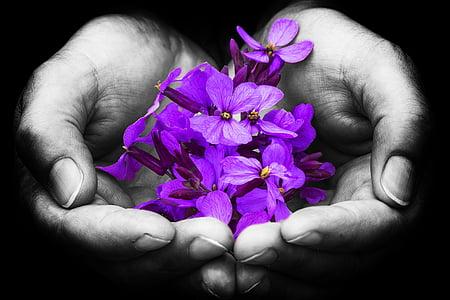 purple petaled flower on person's open palm
