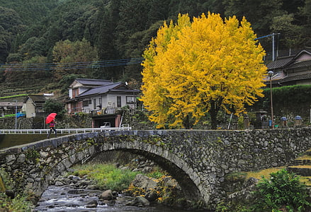 yellow leafed tree near the bridge