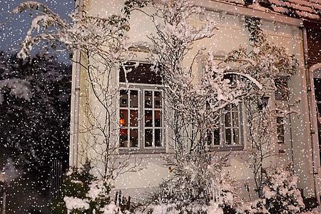 photo of trees beside windows