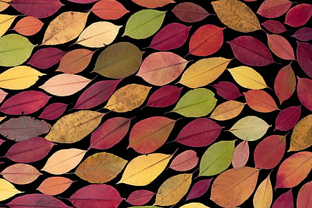 multicolored leaves painting on black background