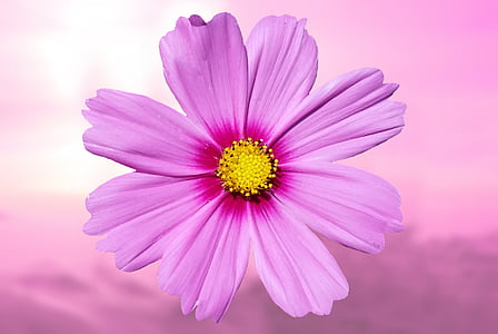 pink petaled flower in close-up photography