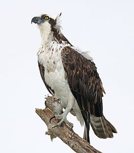 brown and white hawk on brown tree branch during daytime