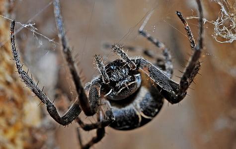 macro photography of black spider