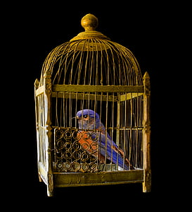 blue and orange bird in brown steel bird cage