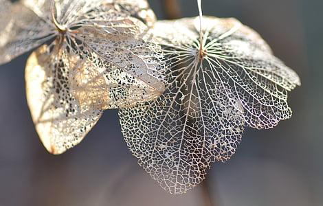 selective focus beige leaf